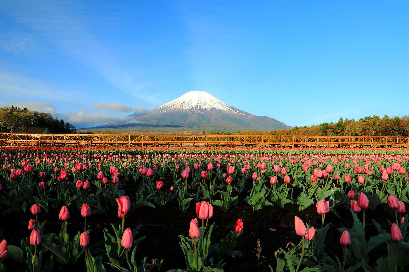 History of Mt Fuji