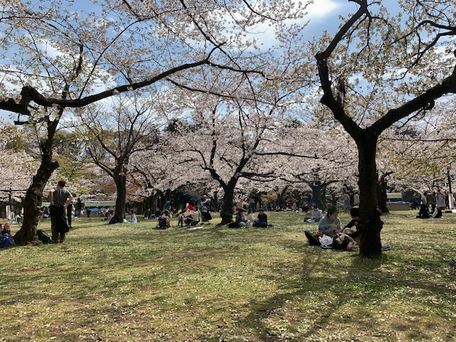 Japan Cherry Blossom Tour 2022 (8d/7n)