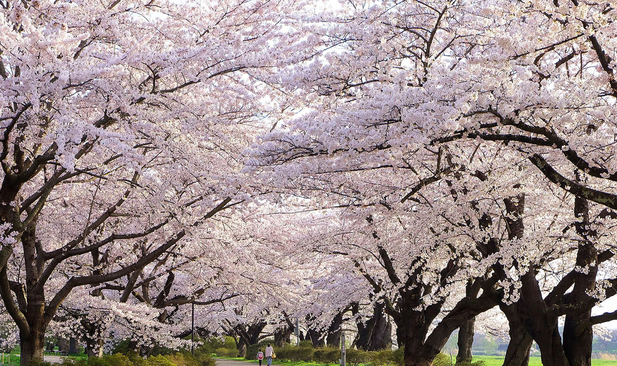 Tono City and Kitakami Tenshochi Park
