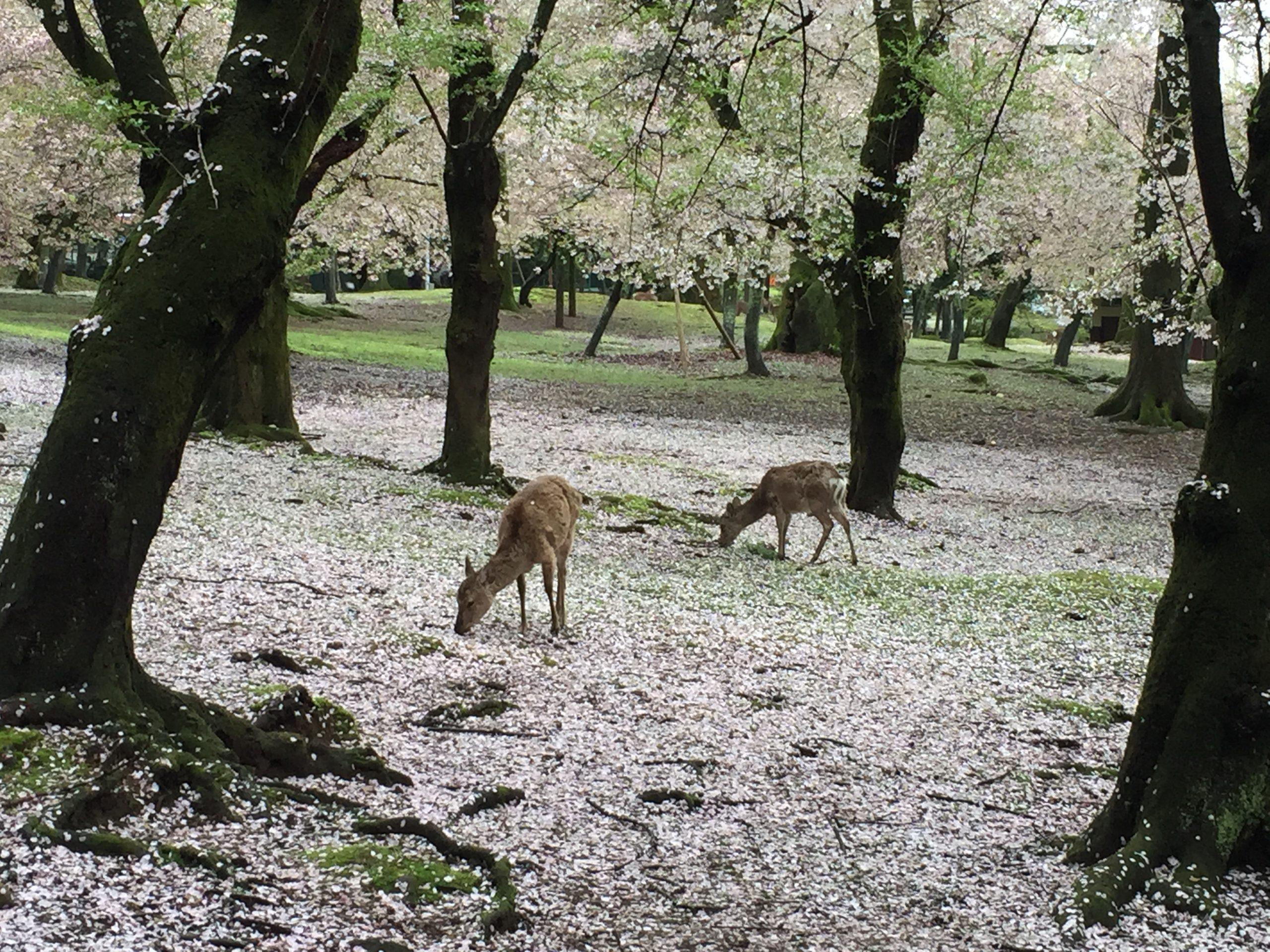 Couleurs d'automne au Japon 2021 en 14 jours
